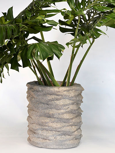 Palm Stump Planter